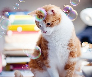 bubbles, cat, and photography image