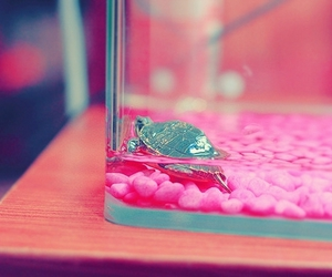 turtle, cute, and pink image