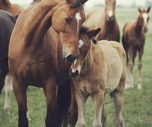 animals, babies, and horses image