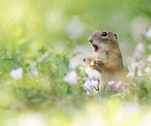 cute, chipmunk, and flowers image