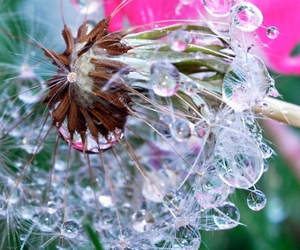 dew, flower, and photo image