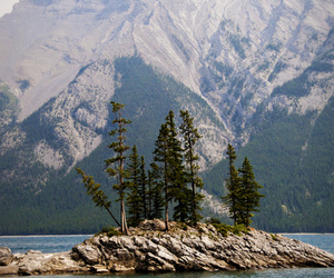 mountains, trees, and landscape image