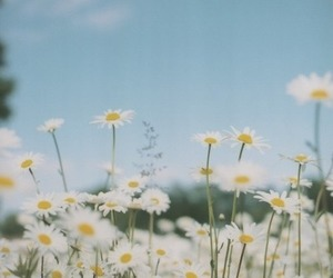 flowers, daisy, and summer image