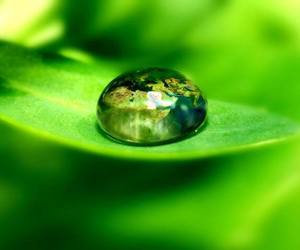 blad, water, and groen image