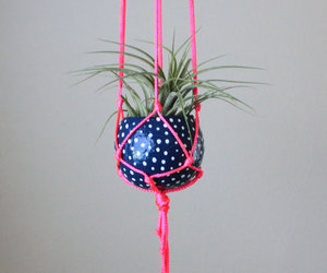 air plant, blue, and hanging image