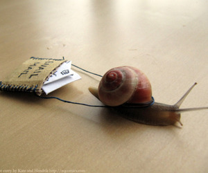 snail, mail, and snail mail image