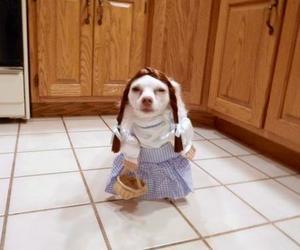 dog, stupid, and dress image