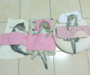 cat, kitten, and sleep image