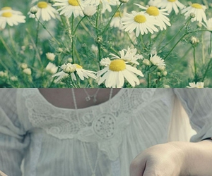daisies, reading, and a quiet place image