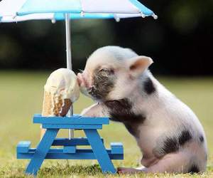 pig, cute, and ice cream image