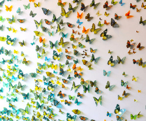 butterflies and Dream image