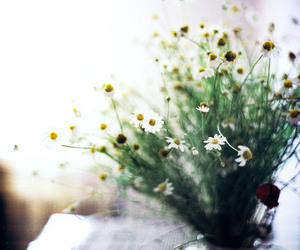 daisy, film, and flowers image