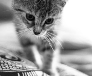 black and white, cat, and kitten image