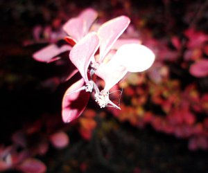 dark, leaf, and flash image