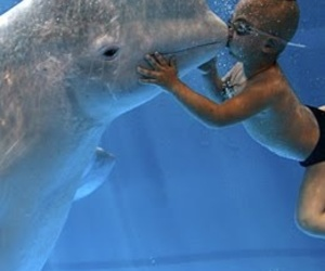 boy, ocean, and beluga whale image