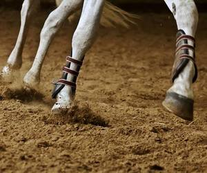 equitation, passion, and horse image