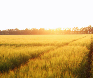 beautiful, fields, and photography image