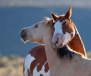 animal, horses, and photography image
