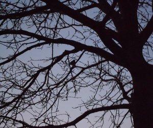 autum, bird, and dark image