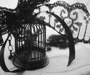 birdcage, black, and lace image