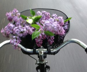 flowers, bike, and purple image