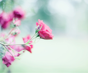 flowers, cute, and pink image