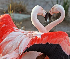 flamingo, pink, and heart image