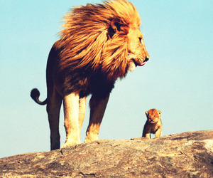 baby, wild animals, and lions image