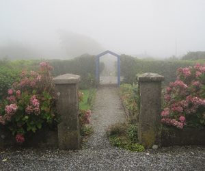 flowers, garden, and fog image