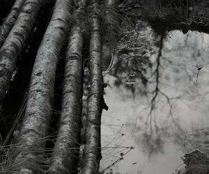 logs, photography, and sadness image