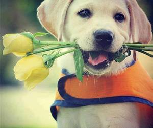 adorable, flowers, and dog image