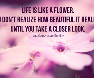 beautiful, flower, and life image