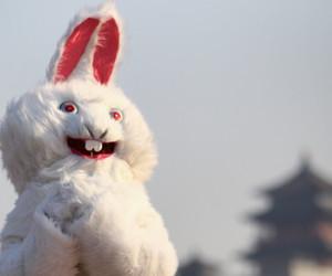 china, new year, and rabbit image