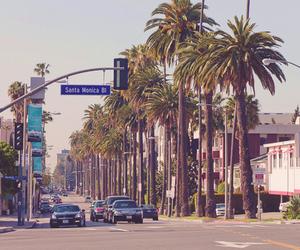 palm trees, santa monica, and summer image