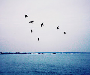birds, black, and blue image