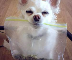 marihuana, puppies, and sweet image