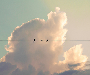 bird, clouds, and sky image