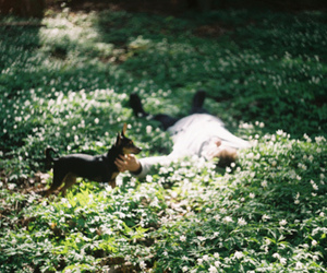 dog, nature, and boy image