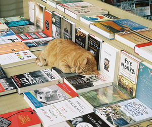 cat, book, and photography image