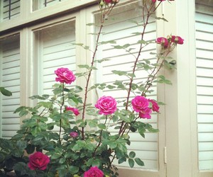 flower, home, and pink image