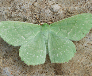 green and moth image