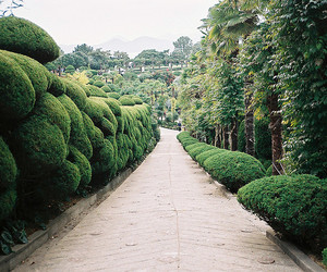 photography, garden, and green image