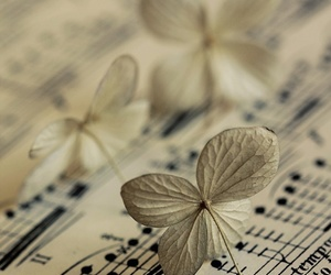 music, flowers, and notes image