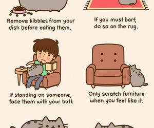 cat, pusheen, and funny image