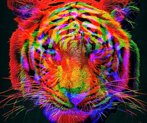 tiger and colorful image