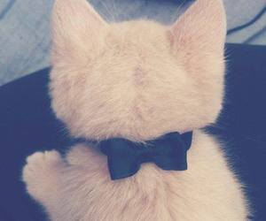 cat, bow, and white image