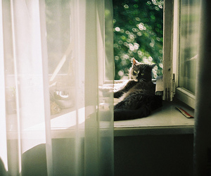cat, vintage, and window image