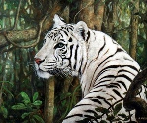 animals and white tiger image