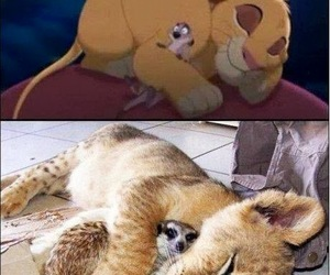 real lion and skink and cartoon lion image