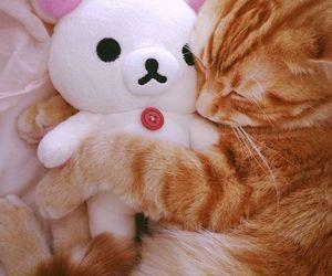 cat, cute, and rilakkuma image